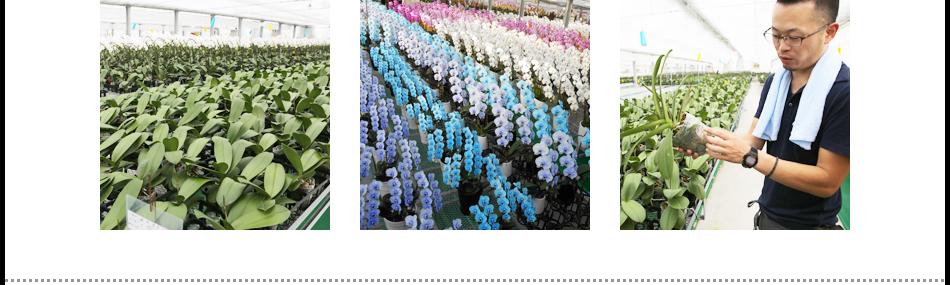 愛知県豊橋市 生産者 松浦園芸の紹介
