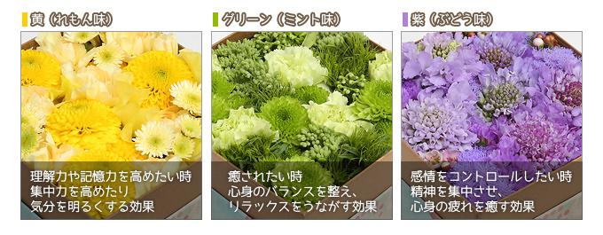 黄色の効果 緑色の効果 紫色の効果