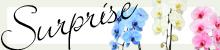 季節限定の胡蝶蘭の特集ページはこちら