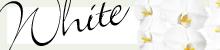 白い胡蝶蘭の特集ページはこちら