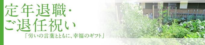 ◆退任祝い◆当店おすすめ胡蝶蘭~新鮮・安心・高品質をお求めでしたらフラワーショップ花夢にお任せください