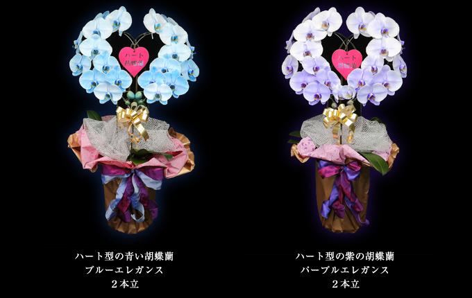 ハート型の青い胡蝶蘭~ブルーエレガンス2本立ち&ハート型の紫の胡蝶蘭~パープルエレガンス2本立ち