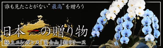 ブルーエレガンスなど珍しい胡蝶蘭特集ページ