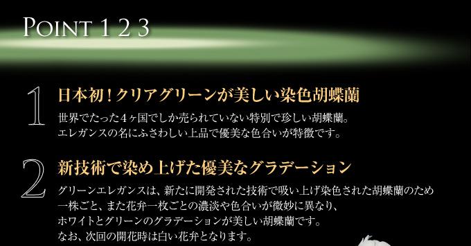 日本初!グリーンに染め上げた珍しい胡蝶蘭