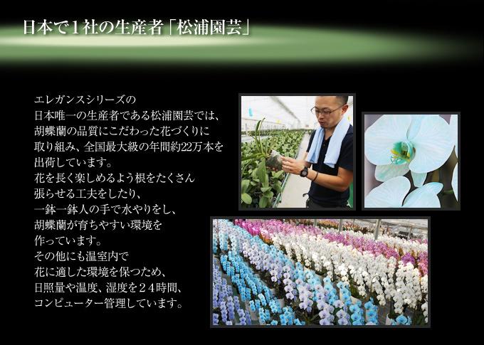 グリーンエレガンスの日本唯一の生産者である松浦園芸