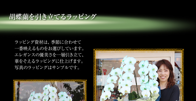 胡蝶蘭を引き立てるラッピング