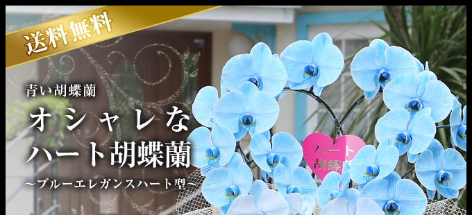 ハート型青い胡蝶蘭(ブルーエレガンス)2本立