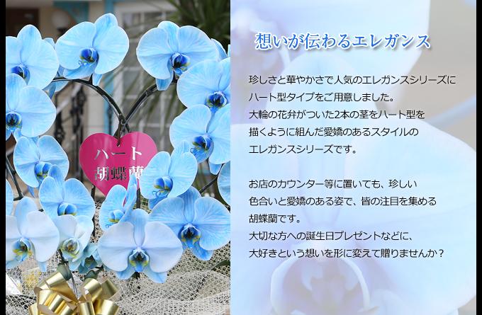 珍しさと華やかさで人気のエレガンスシリーズにハート型タイプをご用意しました。ブルーの上品な色合いは、お供物として故人を偲ぶギフトとしてもご利用いただいております。2本の茎を円を描くように組んだ愛嬌のあるスタイルのエレガンスシリーズです。お店のカウンター等に置いても、珍しい色合いと愛嬌のある姿で、皆の注目を集める胡蝶蘭です。