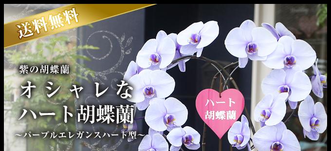 ハート型紫の胡蝶蘭(パープルエレガンス)2本立