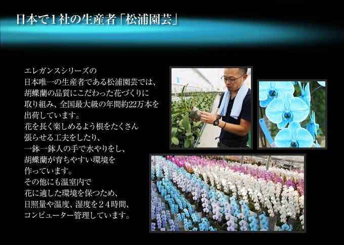 マリンエレガンスの日本唯一の生産者である松浦園芸