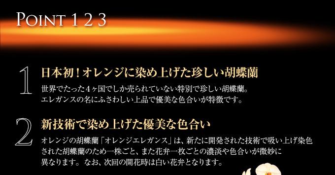 日本初!オレンジに染め上げた珍しい胡蝶蘭