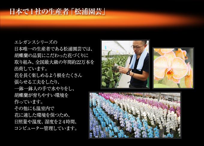 オレンジエレガンスの日本唯一の生産者である松浦園芸