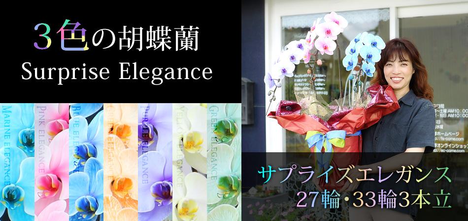 7色から選べる胡蝶蘭