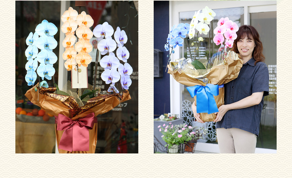 5色から組み合わせを選べる胡蝶蘭