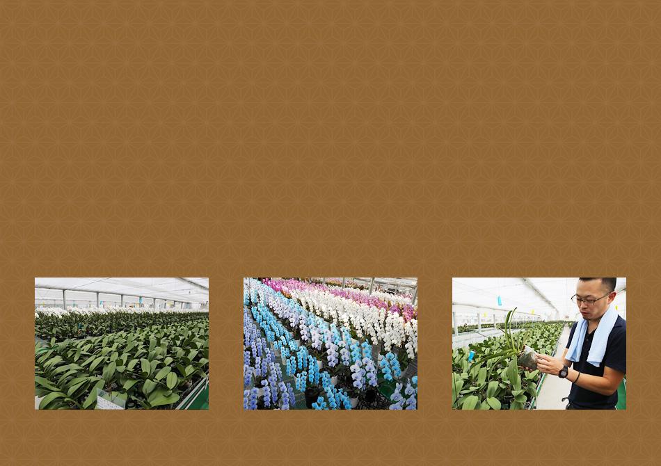 愛知県豊橋市にある生産者・松浦園芸の紹介