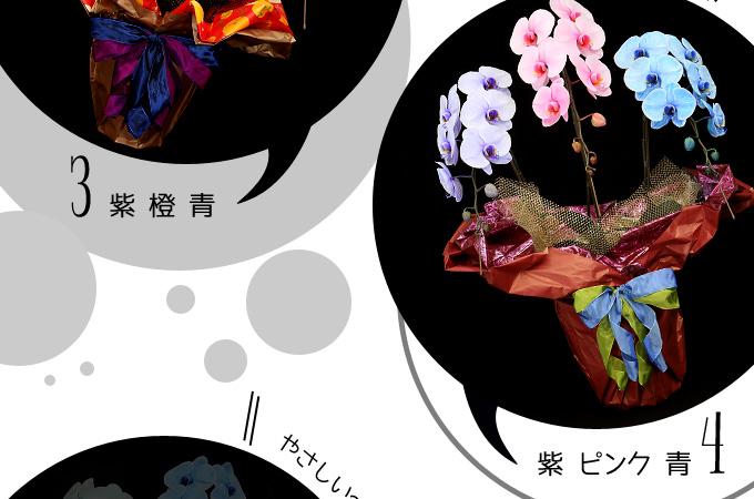 エレガンスシリーズ5色