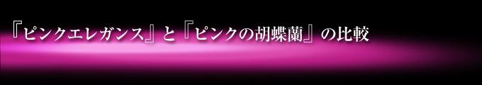ピンクエレガンスとピンクの胡蝶蘭の比較