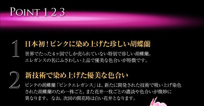 日本初!ピンクに染め上げた珍しい胡蝶蘭