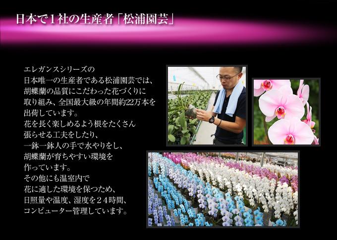 ピンクエレガンスの日本唯一の生産者である松浦園芸
