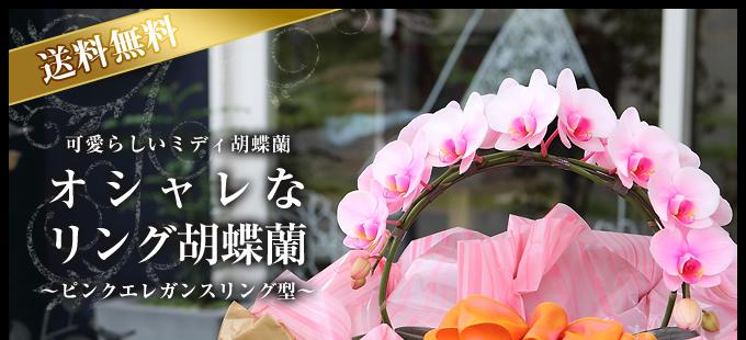 リング型青緑のミディ胡蝶蘭(ピンクエレガンス)2本立