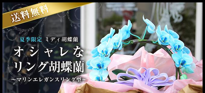 リング型青緑のミディ胡蝶蘭(マリンエレガンス)2本立