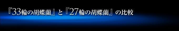 33輪の青い胡蝶蘭(蕾含め33輪~36輪)と27輪の青い胡蝶蘭(蕾含め24輪~27輪)の比較