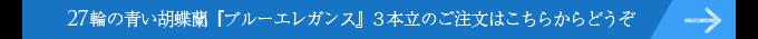 27輪の青い胡蝶蘭ブルーエレガンス3本立