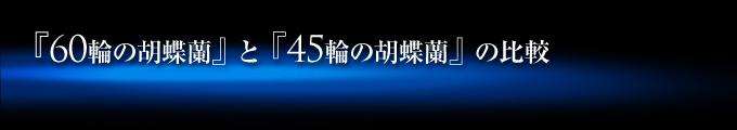 60輪の青い胡蝶蘭(蕾含め55輪~60輪)と45輪の青い胡蝶蘭(蕾含め40輪~45輪)の比較