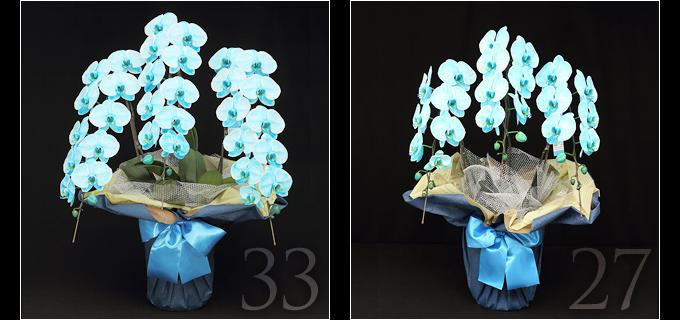 33輪のマリンエレガンスは見る人を圧倒するボリュームがあり27輪の胡蝶蘭と比べると、一際目を引きます。叙勲・褒章祝い、就任・昇進祝いにおすすめです。