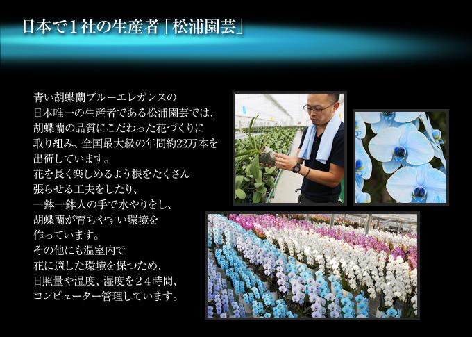 マリンエレガンス『プレミアムプレミアムマリンエレガンス』の日本唯一の生産者である松浦園芸