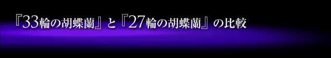 33輪の紫の胡蝶蘭(蕾含め33輪~36輪)と27輪の紫の胡蝶蘭(蕾含め24輪~27輪)の比較