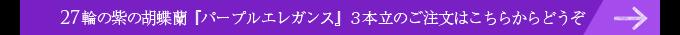 27輪の紫の胡蝶蘭パープルエレガンス3本立