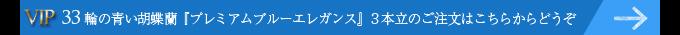 33輪の青い胡蝶蘭プレミアムブルーエレガンス3本立