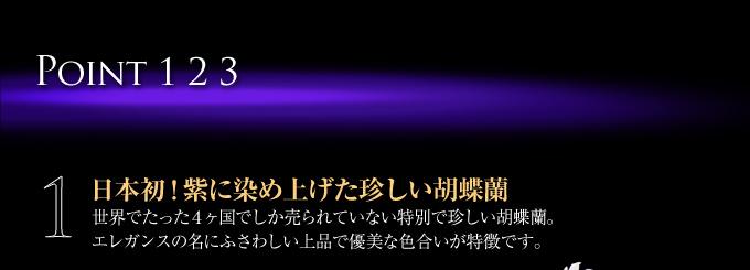 日本初!紫に染め上げた珍しい胡蝶蘭