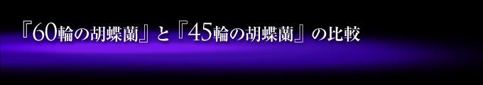 60輪の紫の胡蝶蘭(蕾含め55輪~60輪)と45輪の青い胡蝶蘭(蕾含め40輪~45輪)の比較
