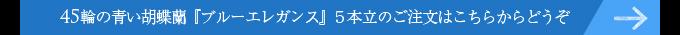 45輪の青い胡蝶蘭ブルーエレガンス5本立