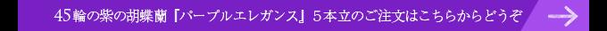 45輪の紫の胡蝶蘭パープルエレガンス5本立