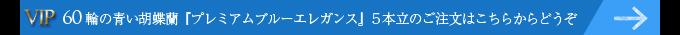 60輪の青い胡蝶蘭プレミアムブルーエレガンス5本立