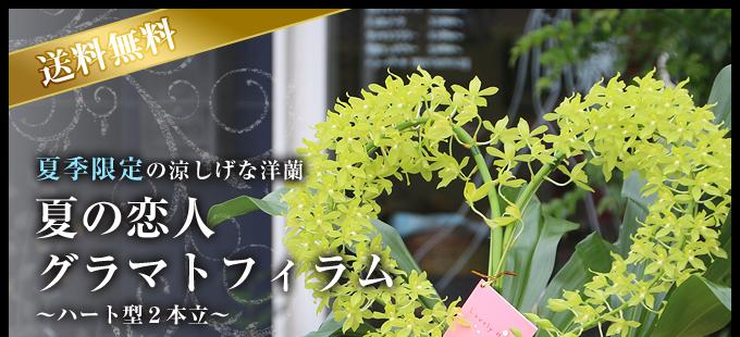 夏の恋人グラマトフィラムハート型2本立