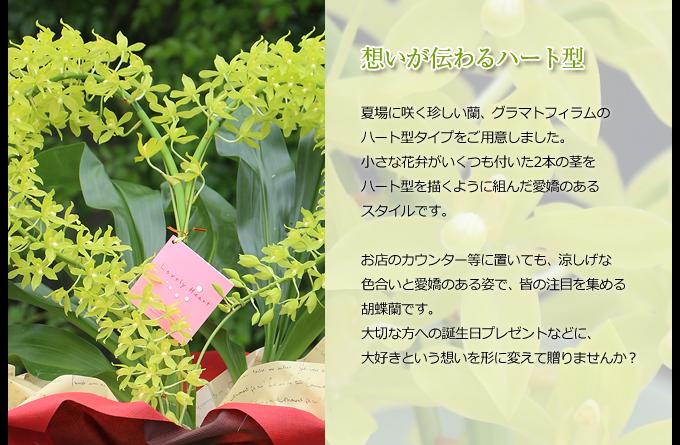 夏場に咲く珍しい蘭、グラマトフィラムのハート型タイプをご用意しました。小さな花弁がいくつも付いた2本の茎をハート型を描くように組んだ愛嬌のあるスタイルです。お店のカウンター等に置いても、涼しげな色合いと愛嬌のある姿で、皆の注目を集める胡蝶蘭です。大切な方への誕生日プレゼントなどに、大好きという想いを形に変えて贈りませんか?