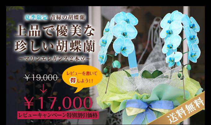 夏季限定 青緑の胡蝶蘭マリンエレガンス2本立
