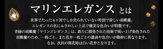 世界で4ヶ国でしか販売していないエレガンスシリーズ夏らしく爽やかな色合いの胡蝶蘭マリンエレガンス