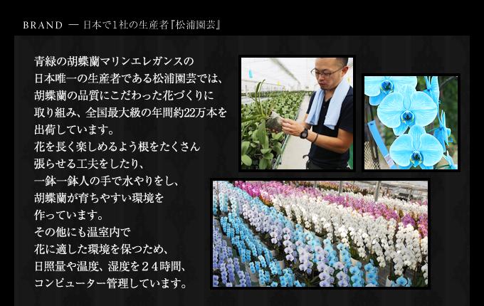 マリンエレガンス日本で1社の松浦園芸