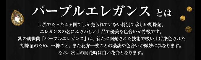世界で4ヶ国でしか販売していないエレガンスシリーズ上品で優美な色合いの胡蝶蘭パープルエレガンス