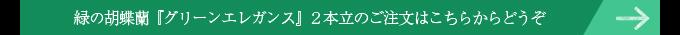 緑の胡蝶蘭パープルエレガンス2本立