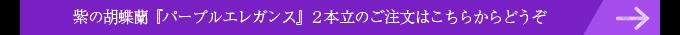 紫の胡蝶蘭パープルエレガンス2本立