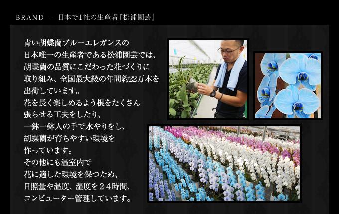 ブルーエレガンス日本で1社の松浦園芸