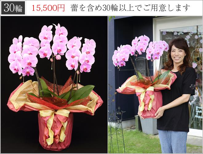 30輪の胡蝶蘭