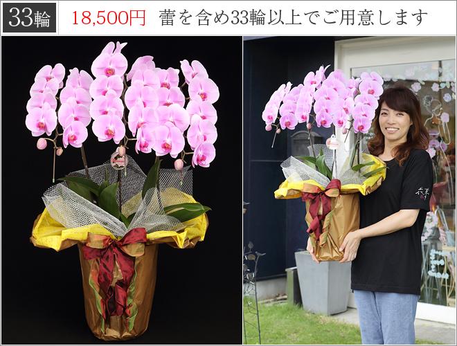 33輪の胡蝶蘭