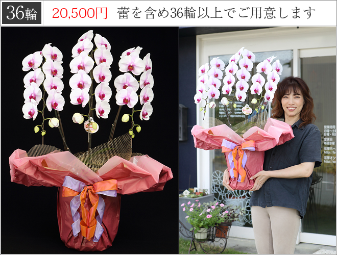 36輪の胡蝶蘭